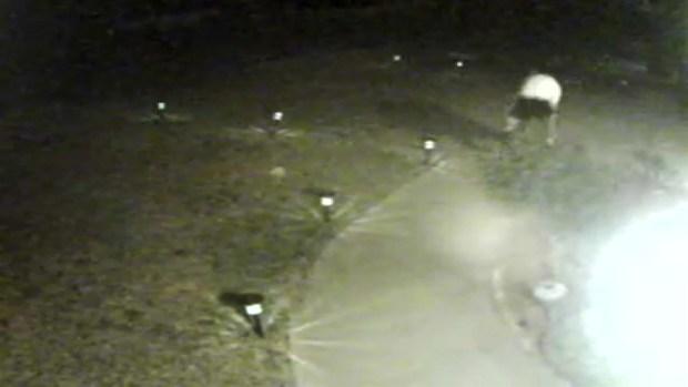 [BAY] Surveillance Camera Films Man Stealing San Jose Family's Cat