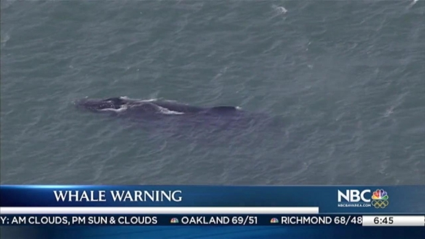 [BAY] Unusual Number of Whales Seen in San Francisco Bay