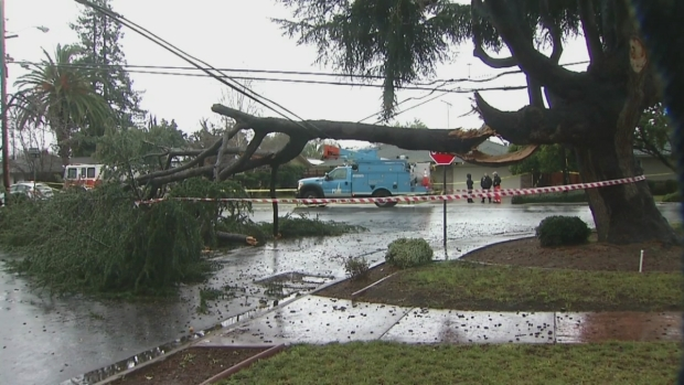 Toppled Trees Crash Onto Houses, Streets