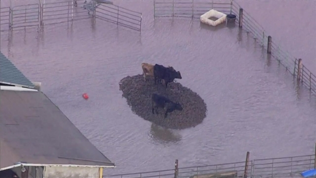 RAW: Flooding in Hollister Displaces 100 People
