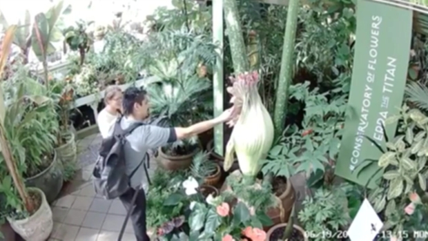RAW: Corpse Flower Fondled n San Francisco