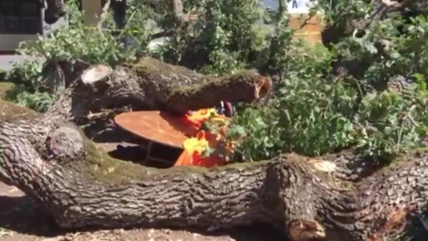 [BAY] RAW: Tree Branch Topples on Crowd at Menlo College