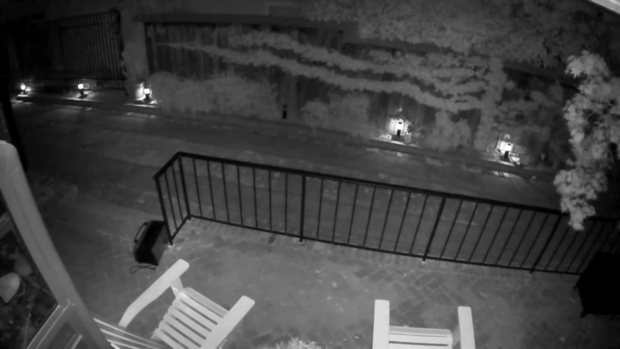 [BAY] Mountain Lion Caught on Camera at San Mateo Home