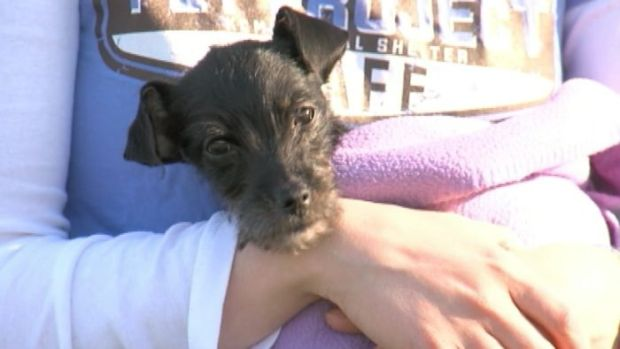 [NATL] Puppy Survives Weeks Locked in Car
