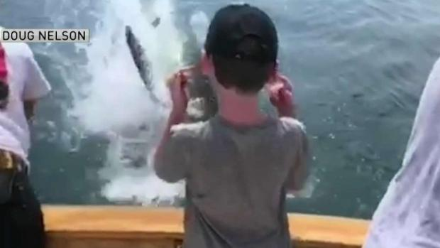 [NATL-NECN] Shark Jumps From Water in Front of Boat Off Cape Cod