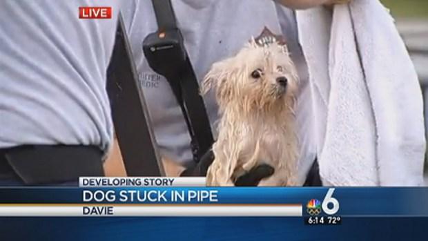 [MI] Dog Rescued From Pipe in Davie