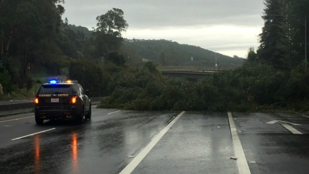 Powerful Storm Uproots Trees Across Bay Area