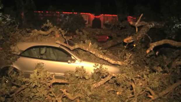 [BAY] Tree Limb Falls, Crushes Several Cars in Pleasant Hill