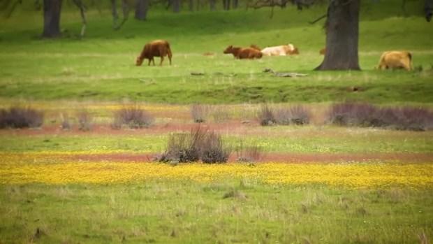 Wildflowers Take Over San Antonio Valley