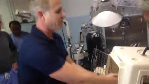 [MI] Raw Video: Kinkajou Goes Home