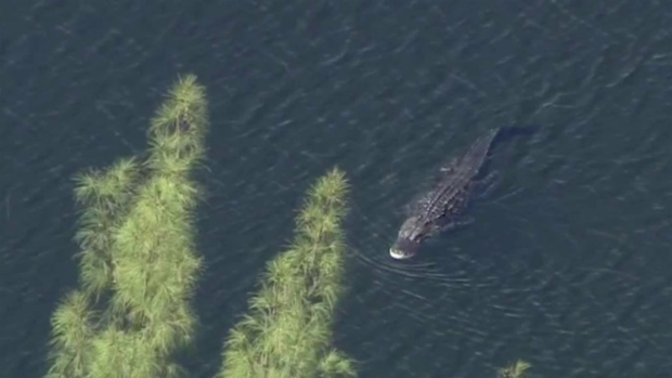 [NATL MI] Davie Police Release 911 Call From Witness During Alligator Attack