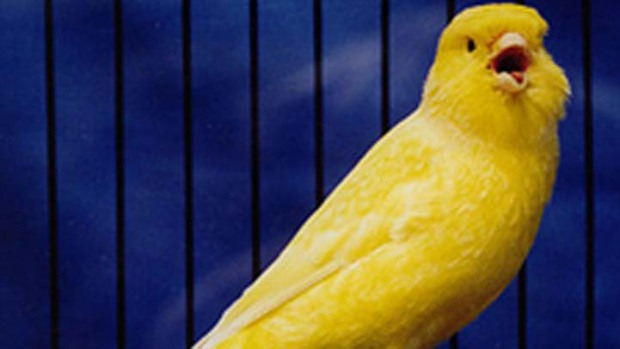 San Jose Voters: The Canary in the Coal Mine