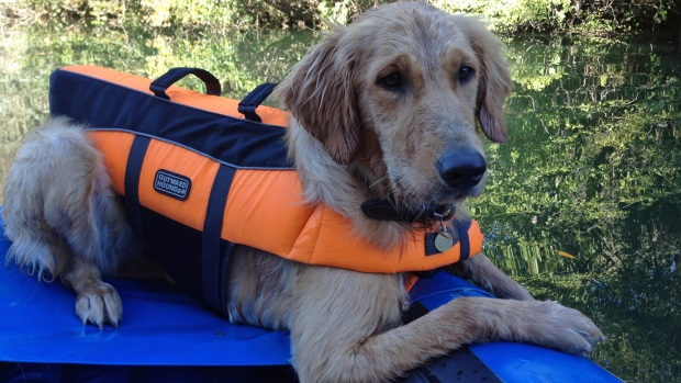 Dog Dies After Swimming in Russian River