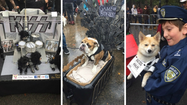 Pooches Sniff Out Best Costume Title in Pet Parade