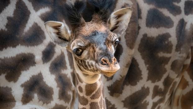 [NATL] Adorable Zoo Babies