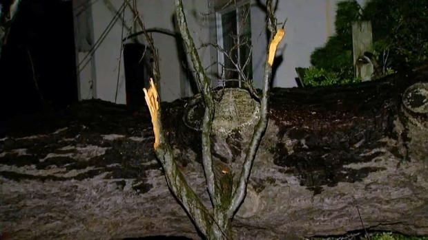 [BAY] Large Tree Topples, Just Misses Homes in Oakland