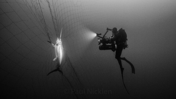 Famed Photographer Paul Nicklen Works to Ban CA Fishing Nets