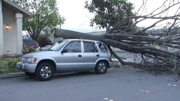 [BAY] Severe Weather Alert: Gusty Winds, Downed Power Lines