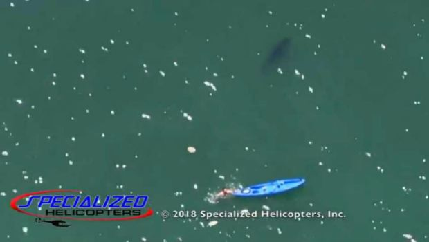 [BAY] RAW: Shark Circles Kayaker in Monterey Bay