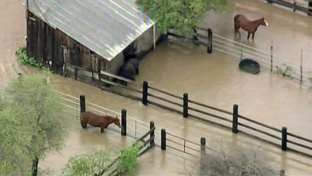 Horses Stranded in San Jose Floodwaters