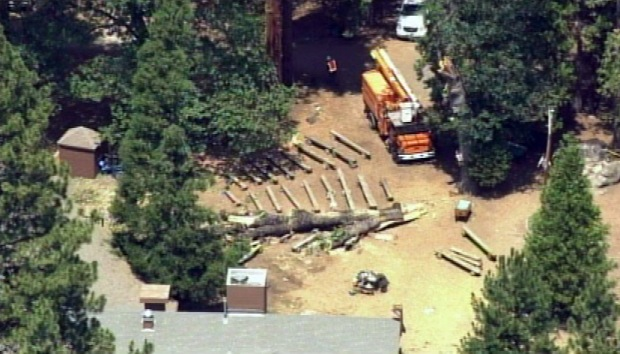 [BAY] Death, Injuries After Tree Falls at Camp Tawonga Near Yosemite