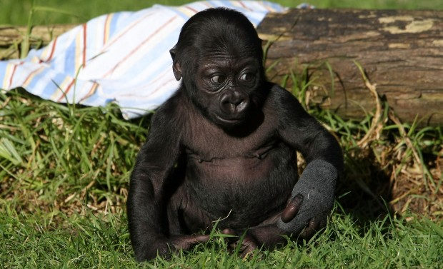 San Francisco Zoo Names Its Newest, Cutest Star
