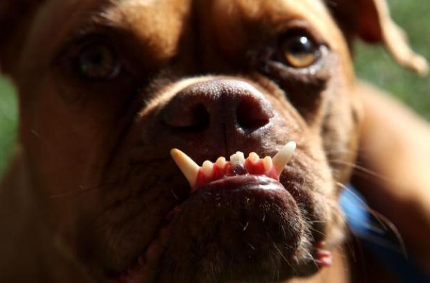[WORTH THE TRIP] A Sweet Look Back: World's Ugliest Dogs