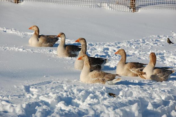 December 2008: Viewer Snow Photos