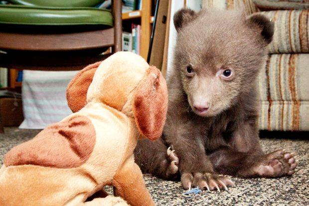 Tahoe The Bear Cub