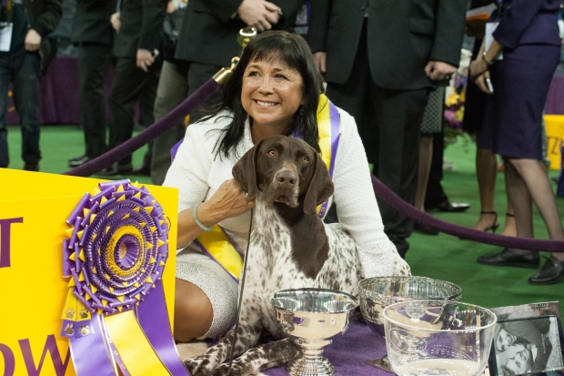 [NATL] Canines Show Off at Westminster Dog Show