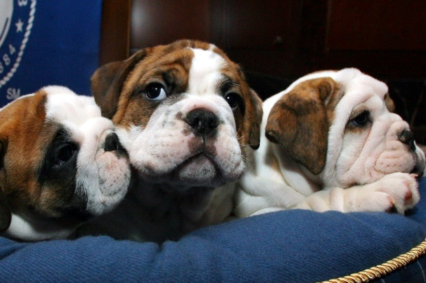 10 Most Common Dog Breeds in Shelters