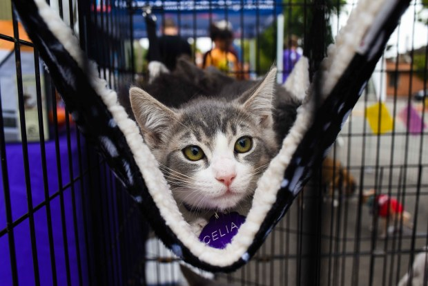 Clear the Shelters 2017 at Bark and Meow Street Fair