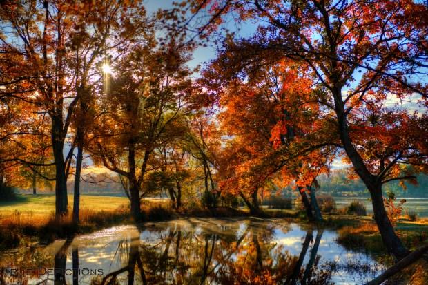 [DC] Fall Foliage 2013
