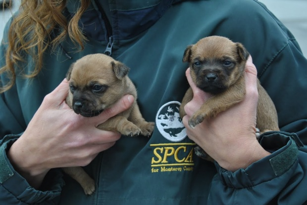 SPCA Rescues 20 Pets From Pacific Grove Hoarder Home