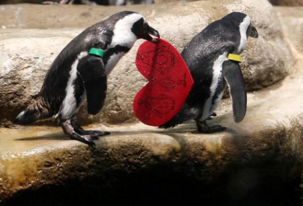 California Academy of Science Celebrates Valentine's Day