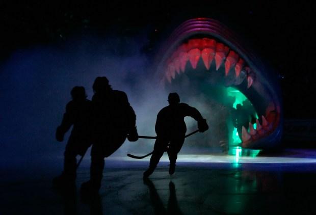 [BAY] New Sharks Defenseman