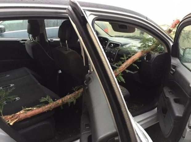 [BAY] Tree Limb Impales Car, Misses Girl By Inches