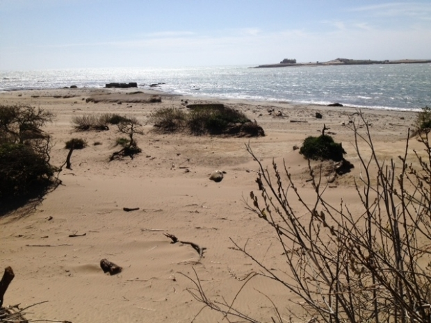 Ano Nuevo Elephant Seal Pupping Season Along Pacific Ocean