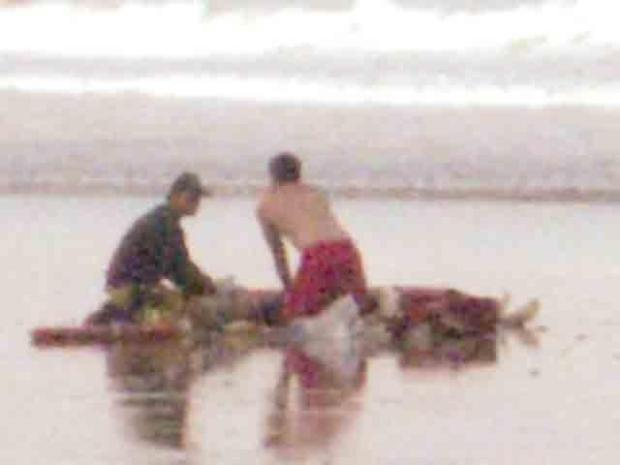 Images: Shark Kills Man Off Solana Beach  (WARNING: Disturbing Images)
