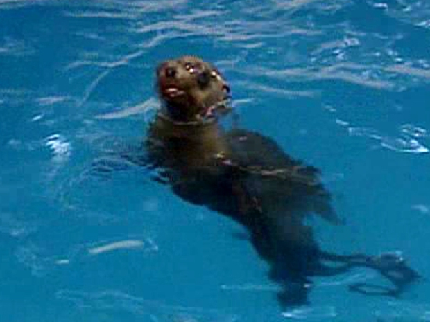 The Sea Lion Who Went to the Mall