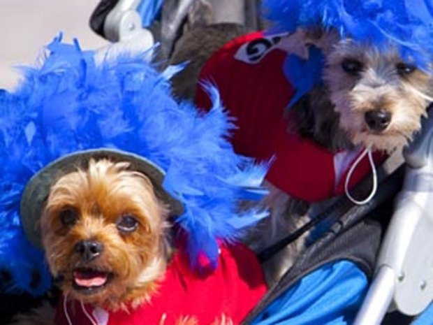 Canine Costumes