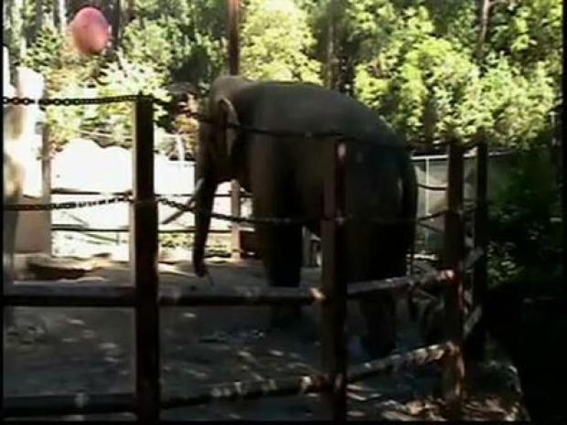 [LA] Billy the Elephant