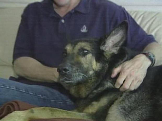 [LA] Hero Dog Cloned
