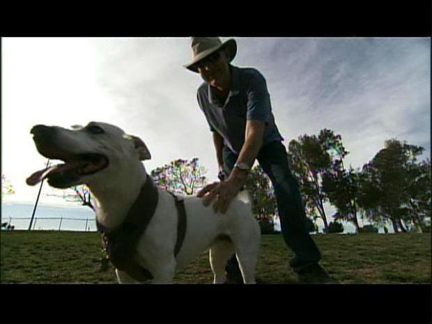 [DGO] Stem Cell Treatments Turn Back Clocks on Pet's Lives