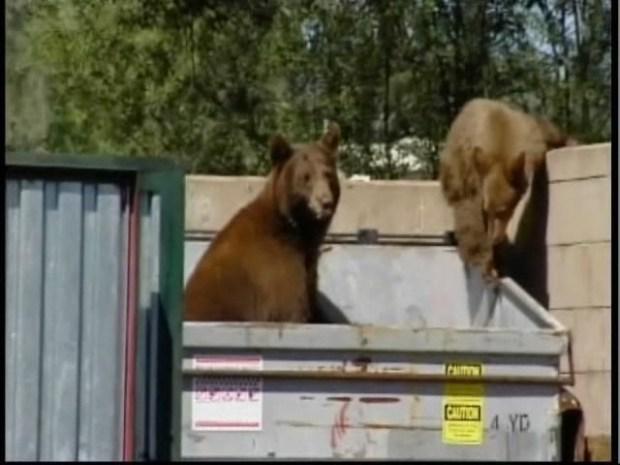 [BAY] Bears Caught Dumpster Diving