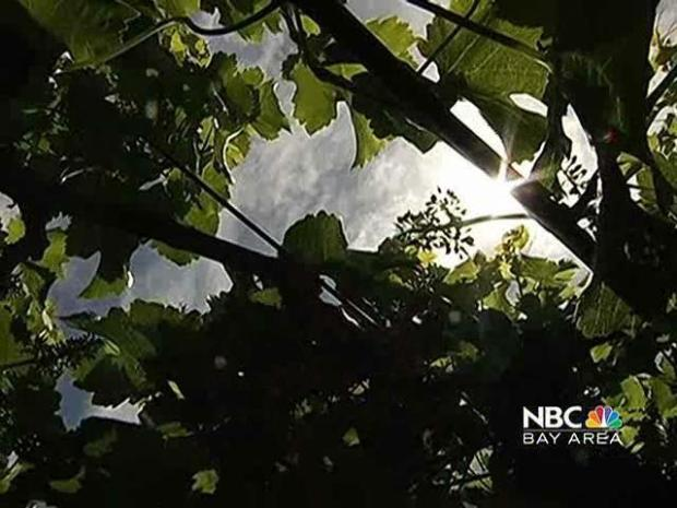[BAY] Napa Wineries Take on Congress