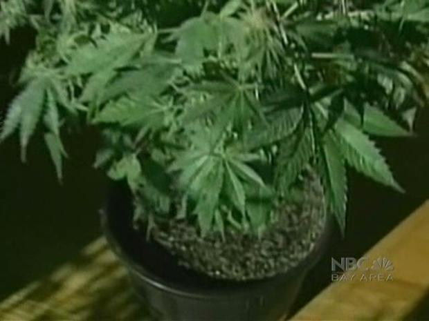 [BAY] Pot Growers Against Legalization