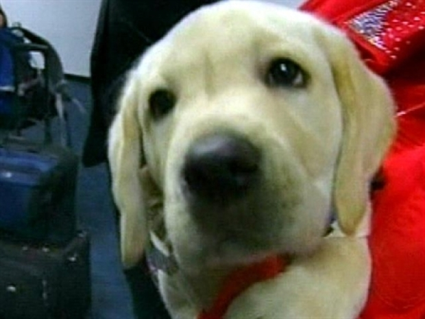 [NEWSC] Pricey Puppy Cloned From Frozen DNA