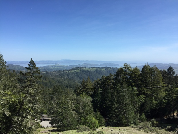 The Beauty of Mt. Tamalpais in Marin County