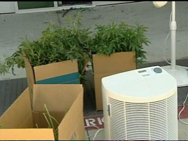 Pot Operation Discovered by Accident